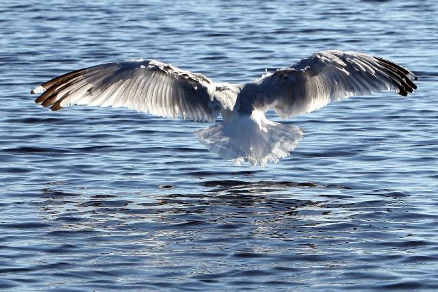 Seagull blog1 808