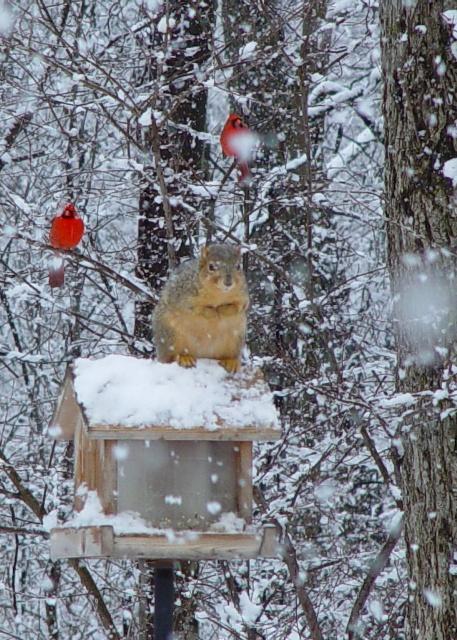 Squirrel N Cardinals BLOG 1