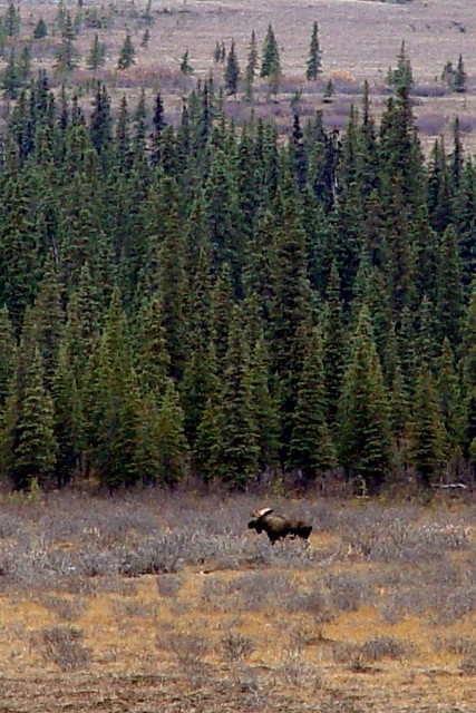 Bull Moose BLOG