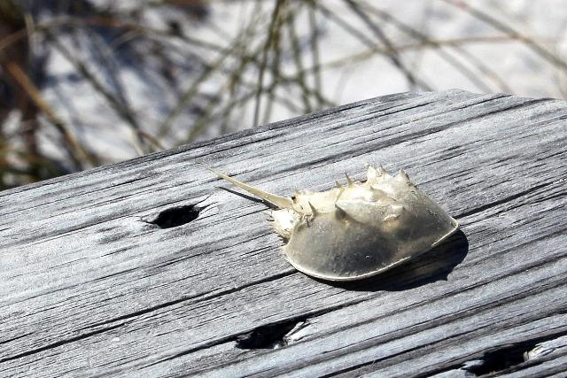 Crab 20809 blog 1