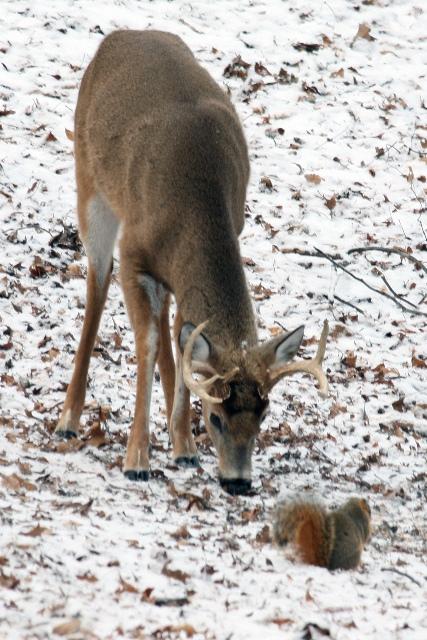 Buck 21609 blog1