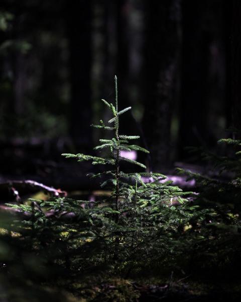 Flora PINE blog 1