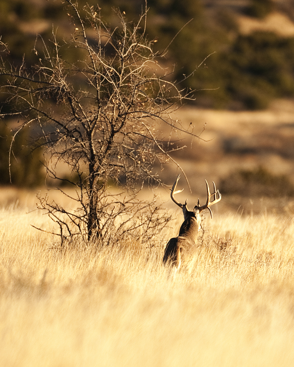 Buck 113010 Gibson Ranch 5b blog