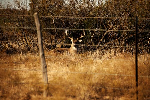 Buck 113010 Gibson Ranch 27 blog