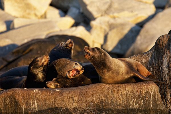 Frailes 011911 Sea Lions 3 blog
