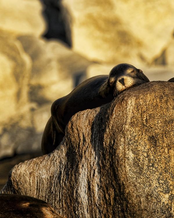Sea Lions 8b blog