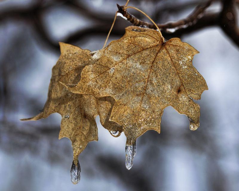 ICE Plants 022111 LEAVES 1b
