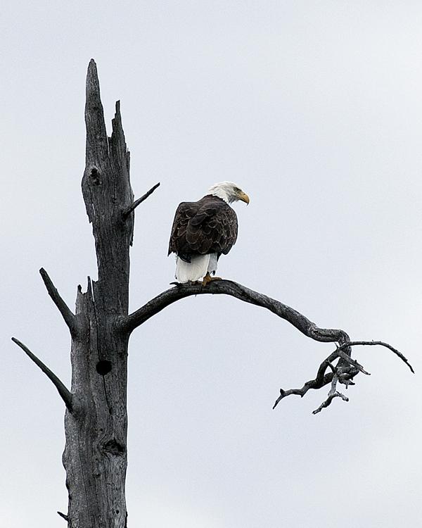 Eagle 080610 NorthEastArm 4 BLOG