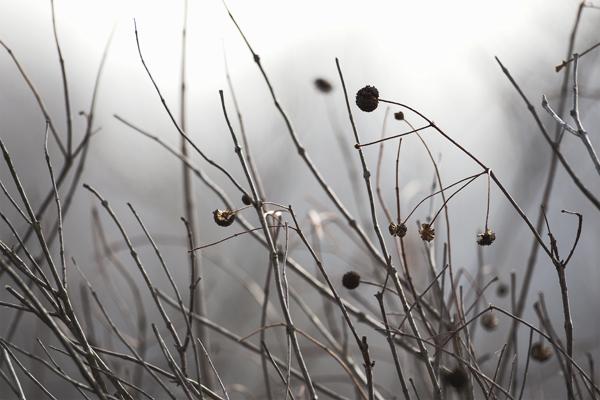 SWAMP Weeds  032111 Ron's Marsh 1 blog