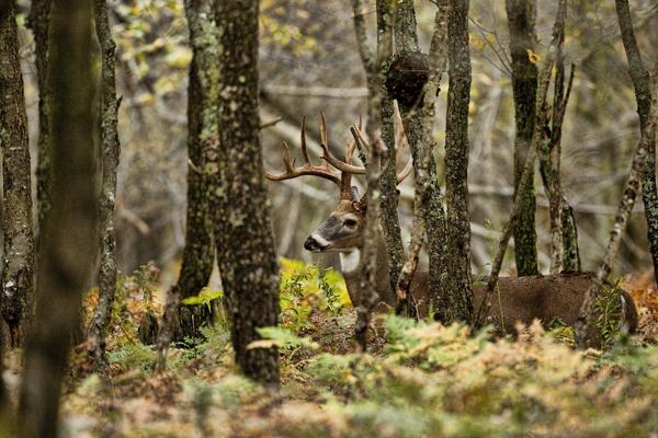 Buck 093011 3 blog