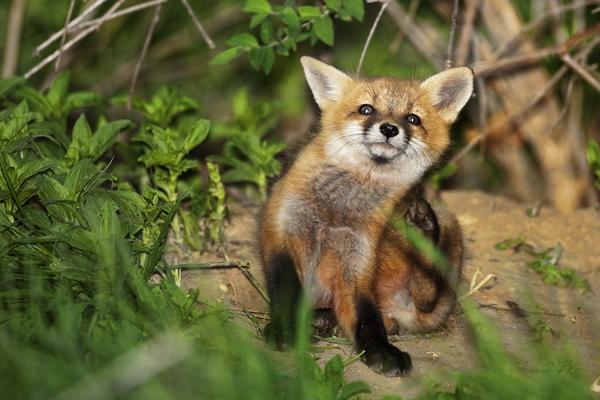 FOX KIT 051011 Fox 13b blog1