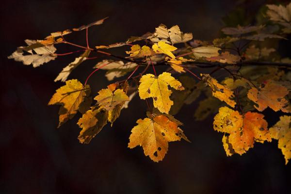 Leaves 102411   2 blog