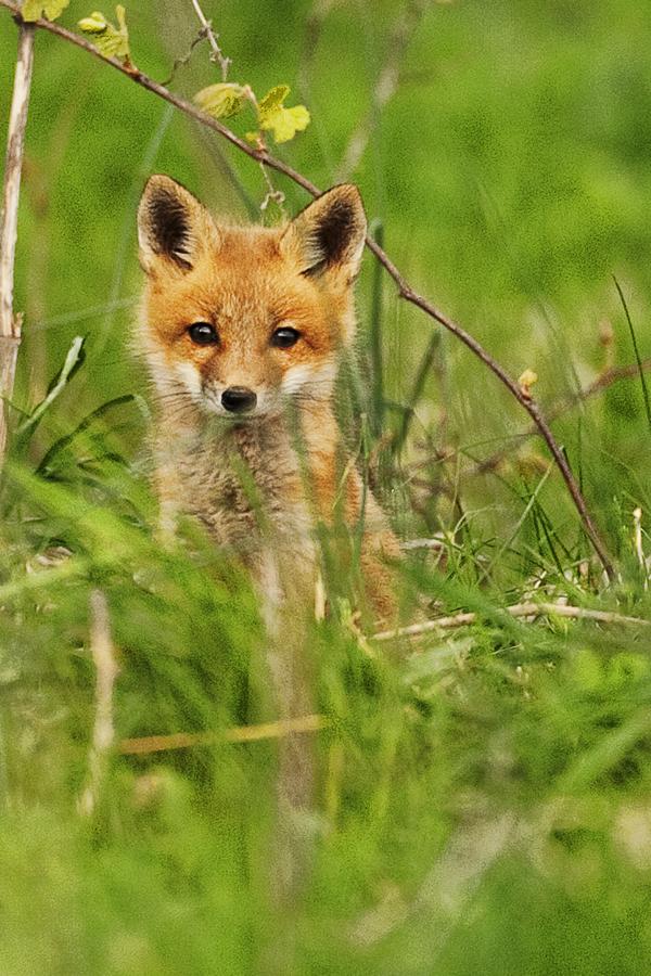 FOX 050911 Kit 3bc blog