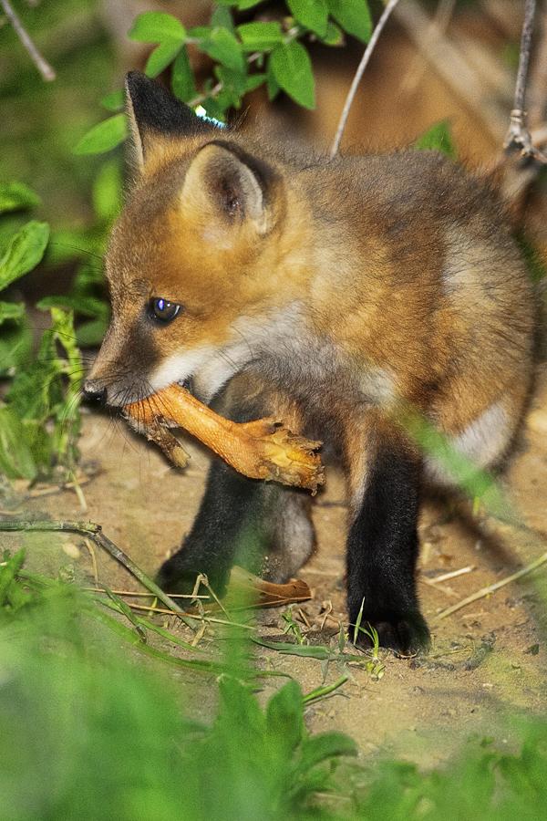 FOX KIT 051011 Fox 8b blog