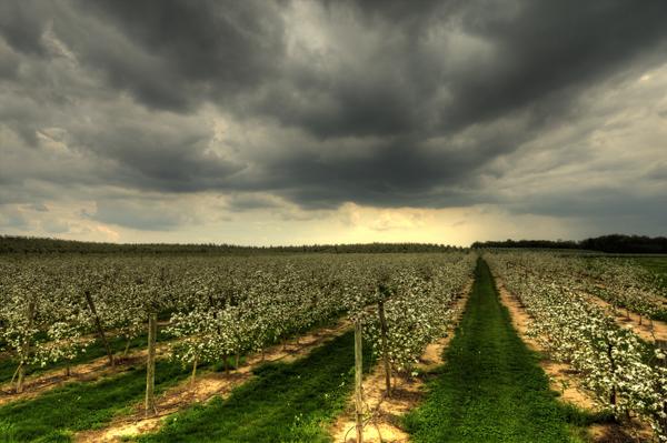 Vic's Orchard 051311   1 blog