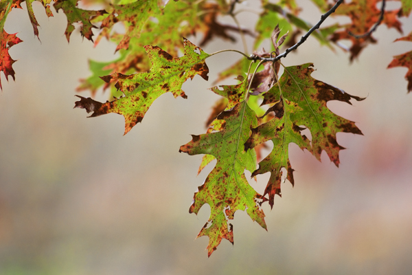 Leaves 102411   1 blog