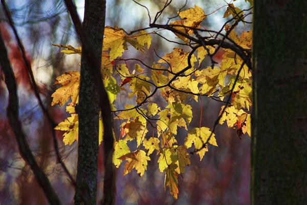 Leaves 102411   3 blog