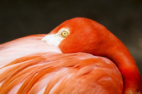 Flamingo 050112   1b blog