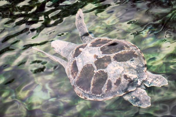Sea Turtle 2012 blog