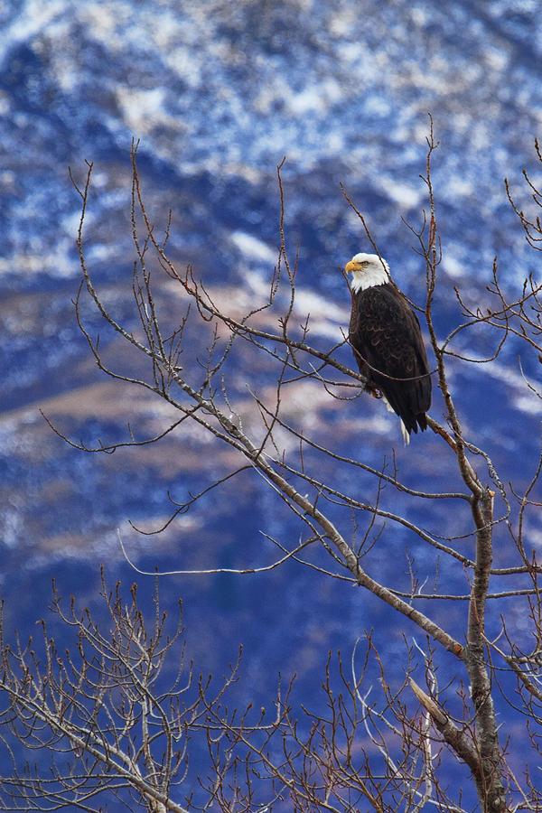 Eagle 110511 Kodiak 1b blog