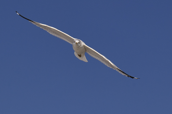Gull 010612 Marco  3 blog