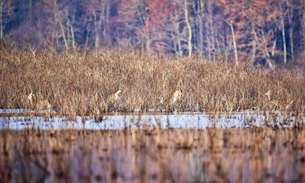 Deer 031712  Wingert's  3c blog