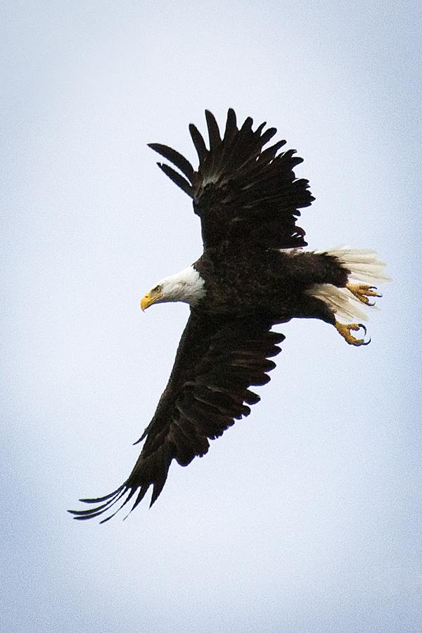 Eagle 081512 CANADA 1c blog