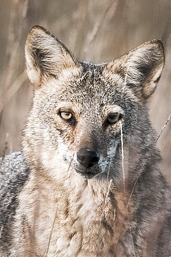 Coyote  8c blog