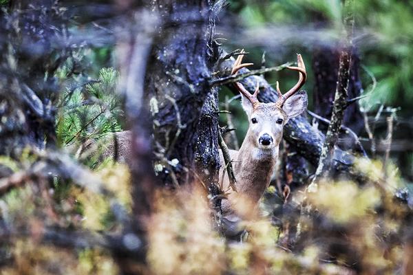 Buck 102112  16 blog