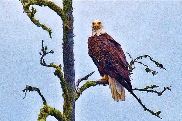 Eagle 081512 CANADA 10b blog