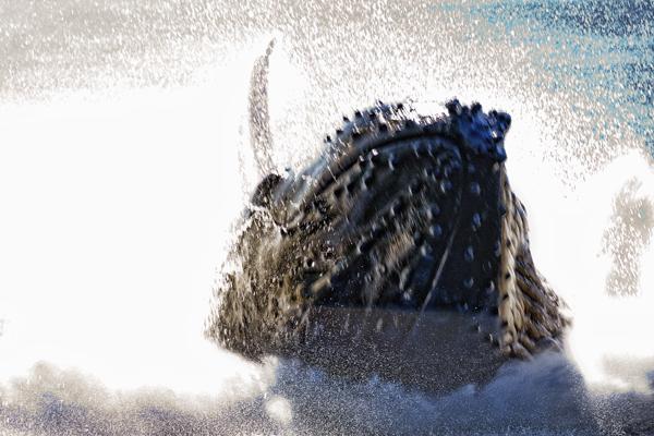 Humpback Breech  091312  14 blog