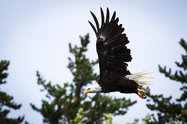 Eagle 081512 12 blog