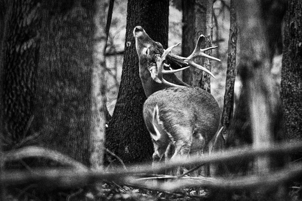Buck   22b blog