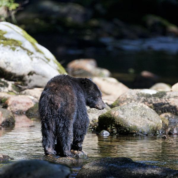 BLACK BEAR  090812  7b blog