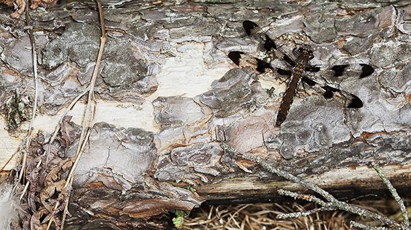 Dragonfly 22613 1b blog