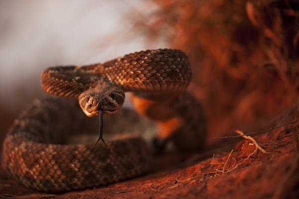 Rattlesnake 101010 TEXAS 5 blog