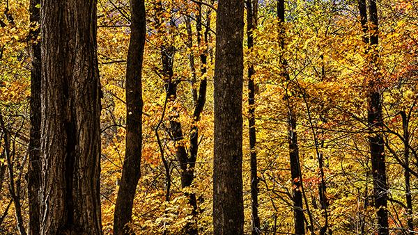 Fall Leaves 110213 Smokey ClingmansDome 10 blog