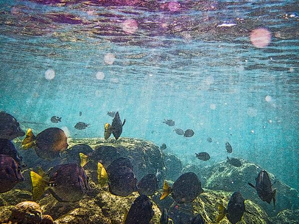 FISH   5c blog