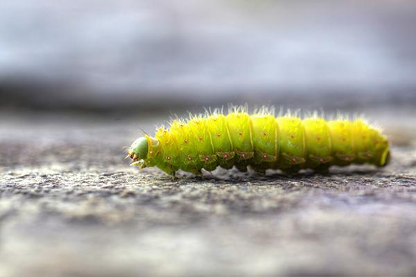 Caterpillar 081814 DORAN 1A blog