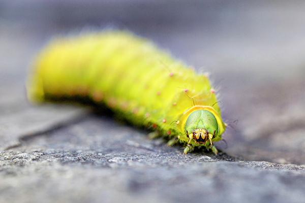 Caterpillar 081814 DORAN 2B blog