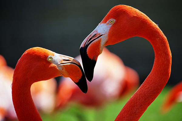Zoo 041215 Flamingos 1 blog