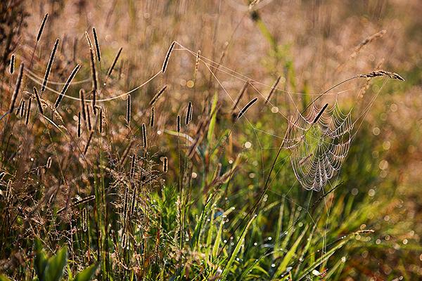 SpiderWED August 2014  1B blog