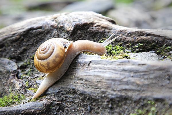 Snail 1 blog