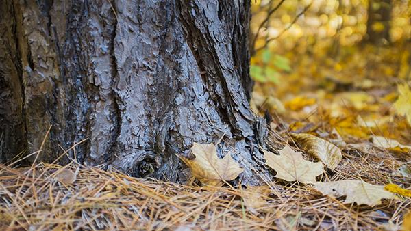 12 PinePlantation 102814 1blog